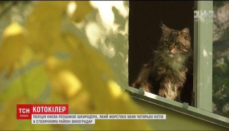 В Киеве неизвестный пытает и убивает кошек