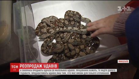 У зоопарку Миколаєва продають одразу 26 маленьких удавів