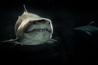 ТСН Stories. Почему акулы атакуют людей