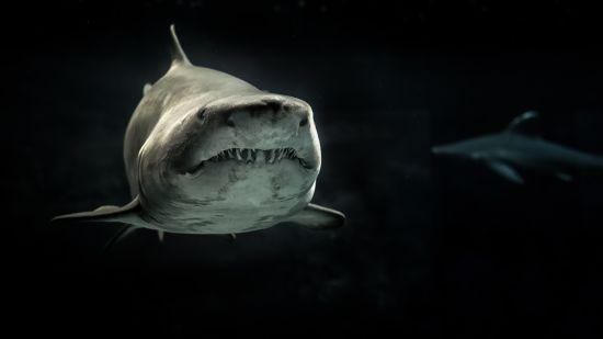 ТСН Stories. Чому акули атакують людей