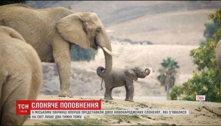 В зоопарке Сан-Диего на свет появились два слоненка