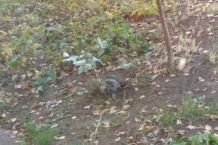 В Лисичанске возле школы упала часть ракеты, проведена эвакуация