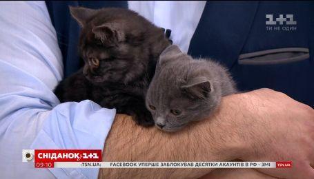 Три двухмесячных котенка ищут дом