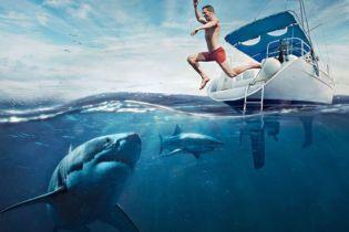Хижі пащі. Чому акули атакують людей?