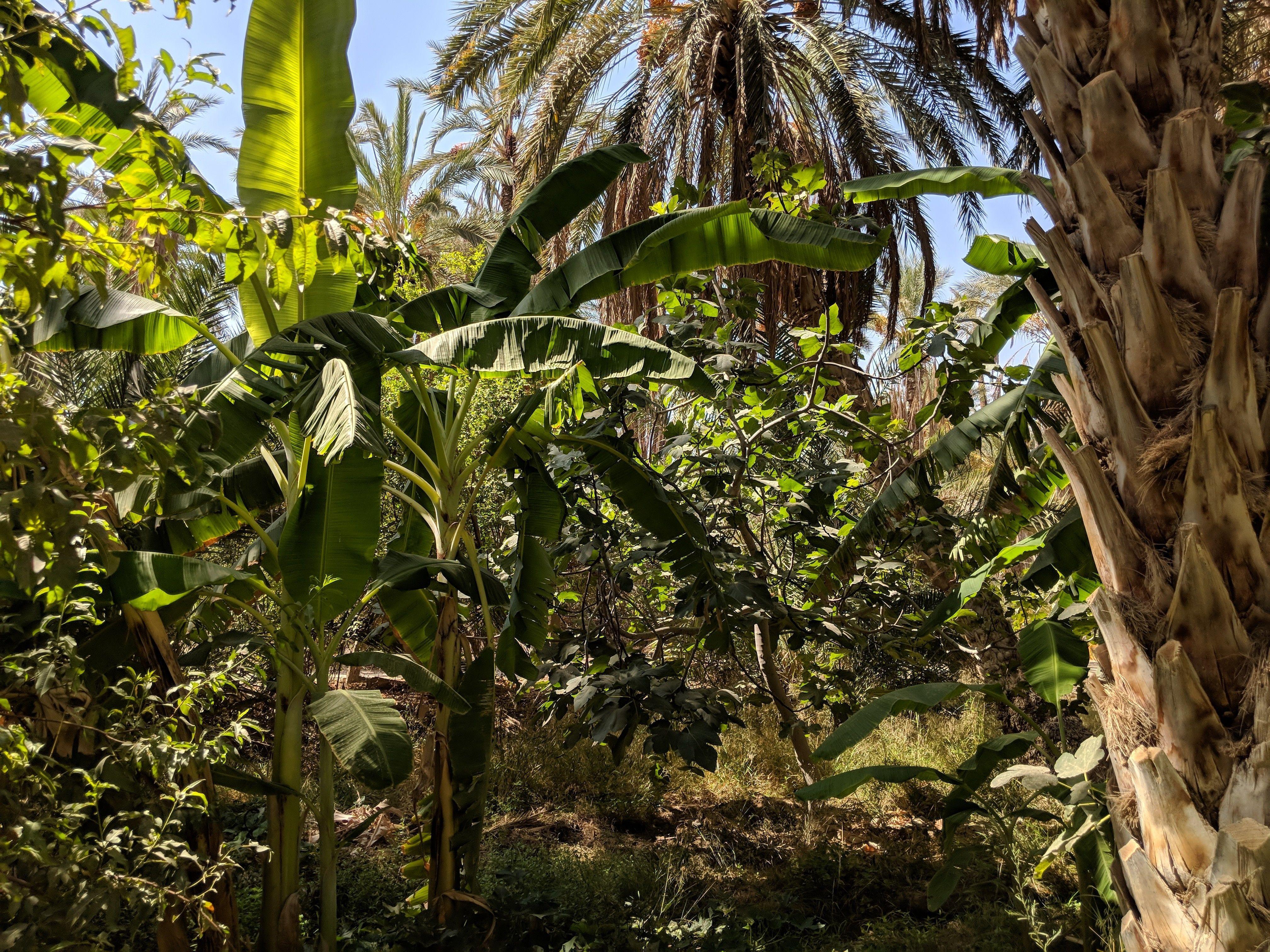 Туніс, для блогів_6