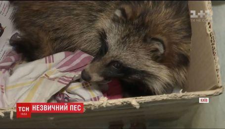 Охотничий пес нашел енота во дворе многоэтажки Киева