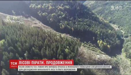 Лісові пірати. ТСН.Тиждень розбирався, чому ліси в Україні вирубують, незважаючи на закони