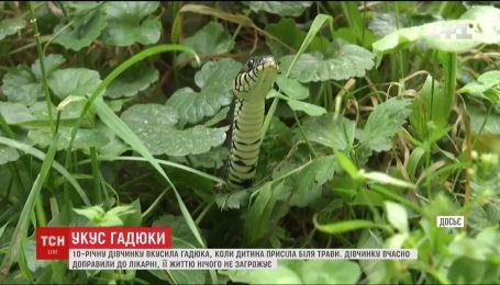 На Львівщині 10-річну дівчинку вкусила гадюка