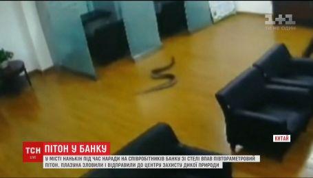 В Китае на голову сотрудницы банка с потолка рухнул огромный питон