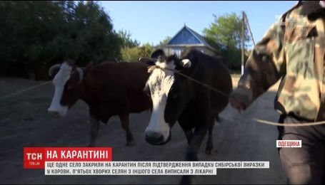 В еще одном селе Одесчины обнаружили больного сибирской язвой корову