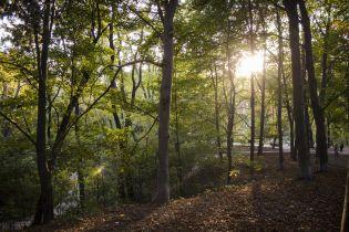 Середа буде сонячною і теплою. Прогноз погоди на 17 жовтня