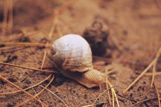 Перспективные направления бизнеса: как аграрии осваивают новые ниши для производства