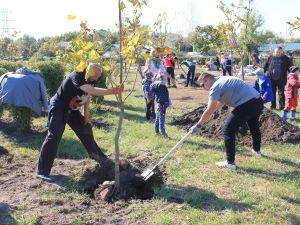 """""""Купил машину? Посади дерево!"""": Тойота-Украина инициировала озеленение Киева"""