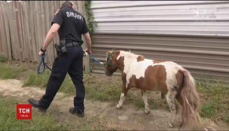 В США спасли пони, что застрял в дренажном канале