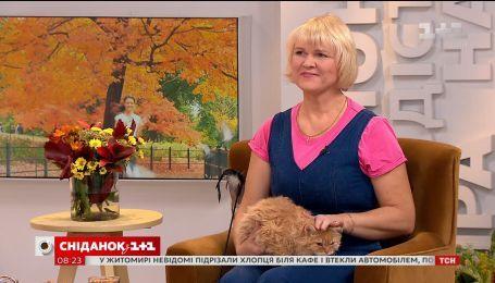 В студии Сніданка владелица кошек породы Селкирк-рекс Лариса Иваненко и её любимец