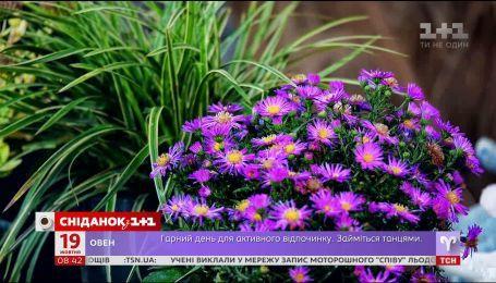 Как сэкономить на обустройстве цветника - Зеленый участок