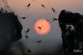 Нічне жахіття арахнофоба. Північ Греції атакували сотні тисяч павуків