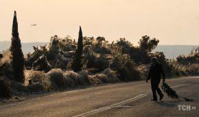 Ночной кошмар арахнофоба. Север Греции атаковали сотни тысяч пауков