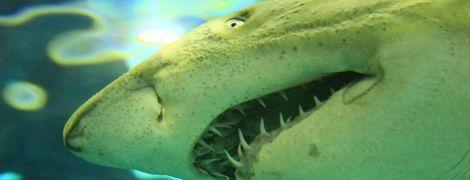"""""""Она схватила за кисть, локоть, немного за губу"""": в Новой Зеландии на серфера напала белая акула"""