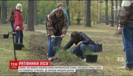 Киевляне самостоятельно высадили две тысячи саженцев сосны в Парке партизанской славы
