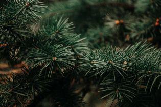 В киевском парке люди собственноручно высадили две тысячи саженцев, чтобы спасти лес