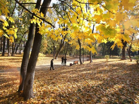 До України прийшло потепління. Якою буде погода 12 жовтня