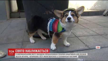 В американском городе Пассадене устроили Хэллоуин для собак