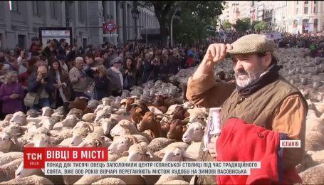 Более две тысячи овец заполонили Мадрид во время традиционного шествия