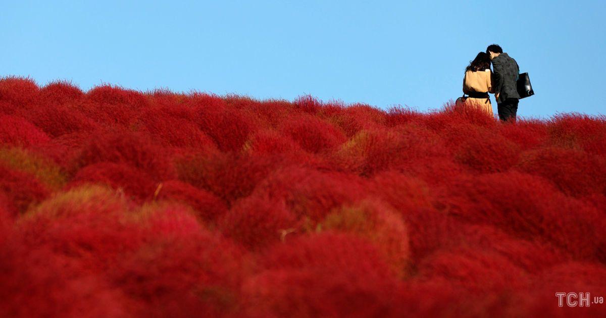 Поля цветов в Японии