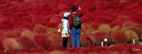 Вогняні поля. Опубліковані приголомшливі фото парку у Японії, який цвіте цілий рік