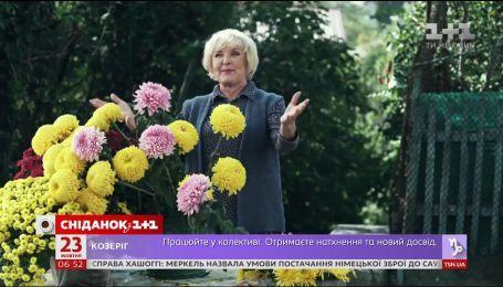 Пра-Ада: Украинская народная артистка Ада Роговцева стала прабабушкой