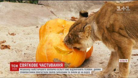 Подготовка к Хэллоуина: жителей старого зоопарка Бельгии угостили вырезанными тыквами