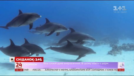 Уляна Супрун: користь дельфінотерапії дуже сумнівна