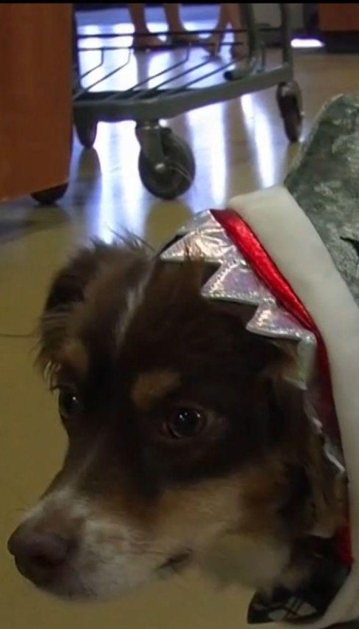В США набирают популярность праздничные костюмы к Хэллоуину для собак