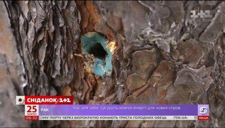 Як і навіщо в Києві отруїли цілий гектар лісу