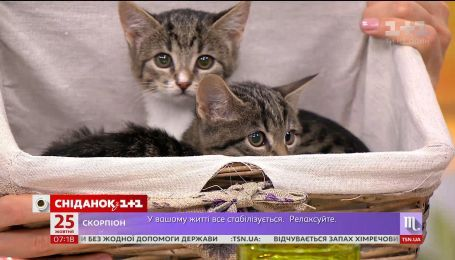 Трехмесячные котята Тоня и Тома ищут хозяев