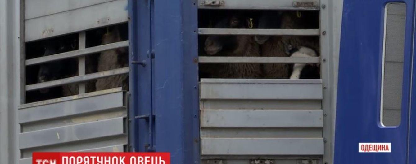 """Ветеринари прогнозують нові смерті овець із """"фури смерті"""""""
