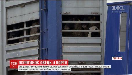 """У Чорноморському порту обіцяють облаштувати майданчик для овець, """"замурованих"""" у фурі"""