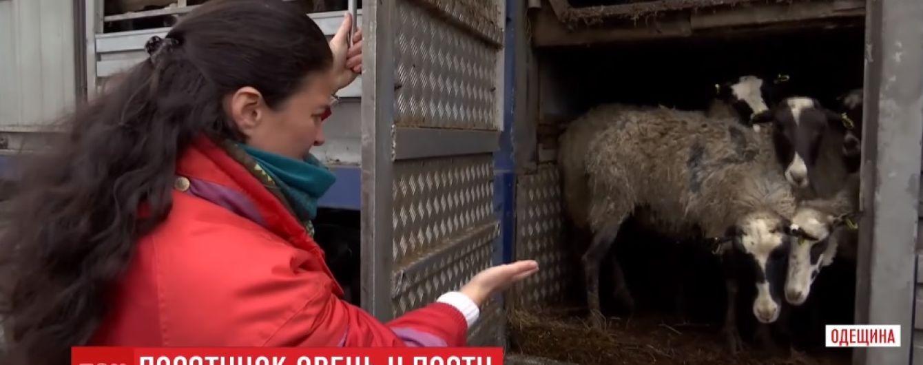 """Овечья """"фура смерти"""" прибыла из Одесской области в Винницкую"""