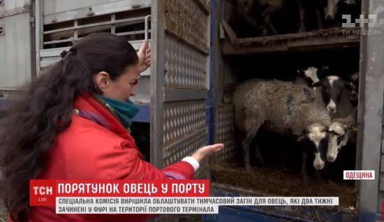 На Одещині чиновники дали шанс отарі овець, яка повільно вмирає від голоду на території порту