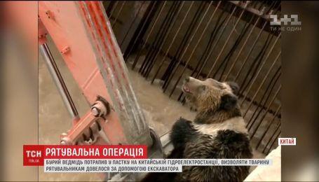 Бурый медведь попал в ловушку на китайской гидроэлектростанции