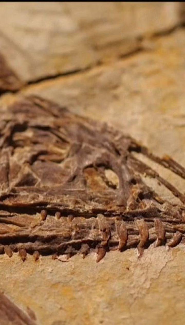 В Китае на стройплощадке рабочие случайно наткнулись на окаменевшие кости динозавров