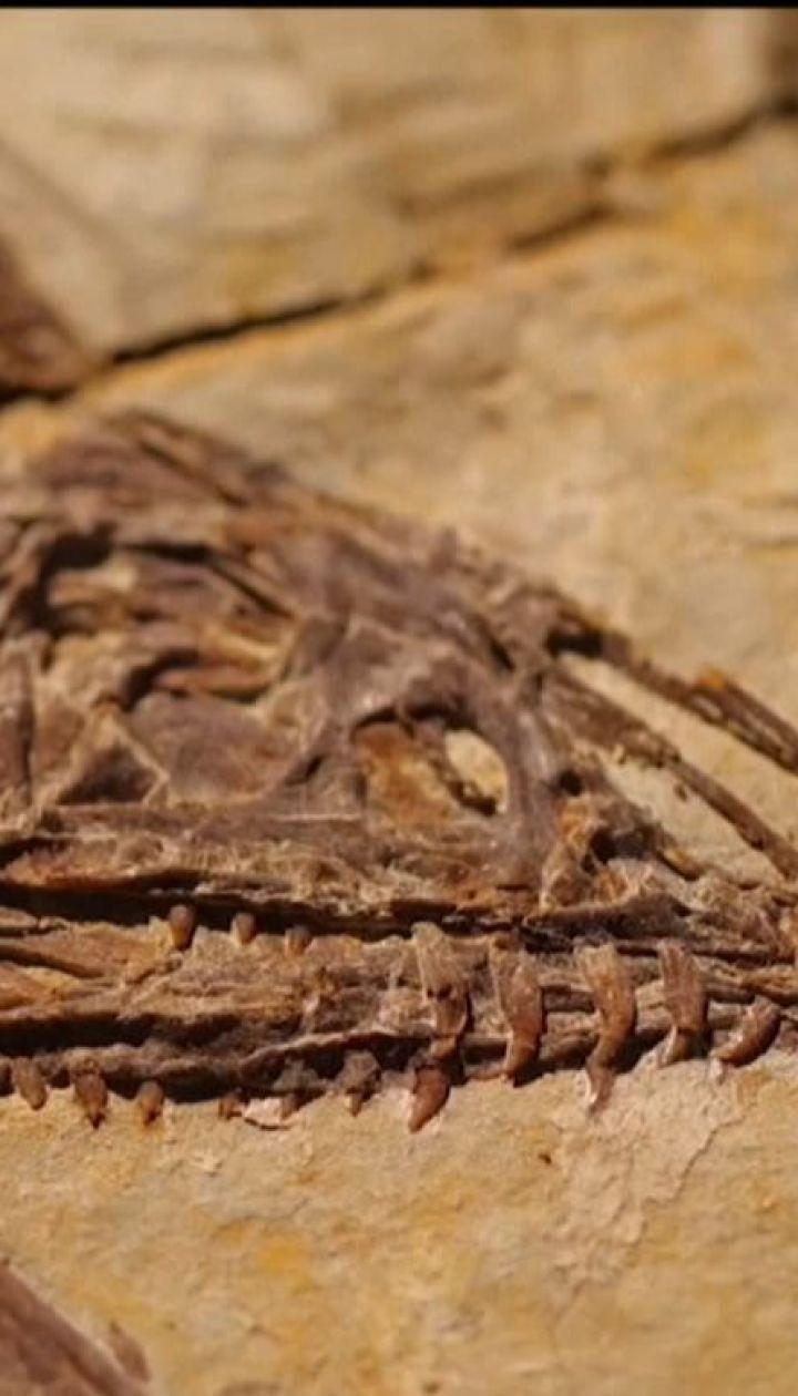 У Китаї на будмайданчику робітники випадково натрапили на скам'янілі кістки динозаврів