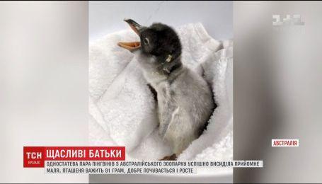 В однополой пары пингвинов родился детеныш