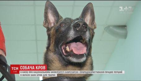 У Києві відкрився перший в Україні банк крові для тварин