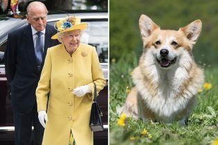 Елизавета II загрустила из-за смерти своей карликовой собачки