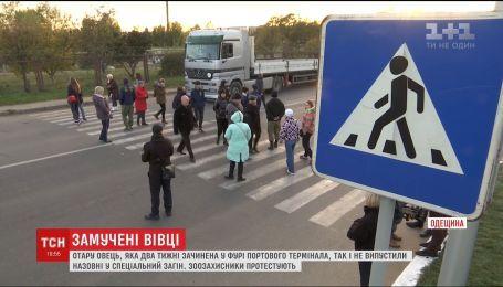 Зоозахисники перекрили дорогу, протестуючи проти знищення зачиненої у фурі отари овець
