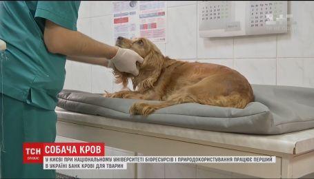 В Украине создали первый банк крови для собак