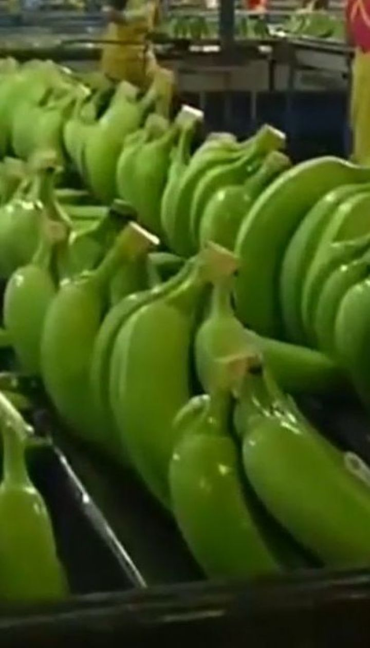 Бананам грозит вымирание через грибок