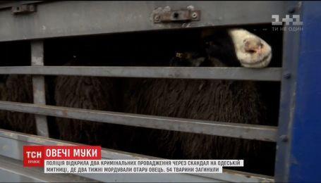 Зоозащитники собираются пикетировать Госпотребслужбу из-за скандала с овцами